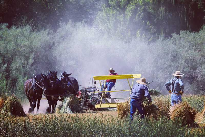PHOTO BY EDWARD HEATH - Saturday marks the third annual Jefferson County Historical Society Threshing Bee.
