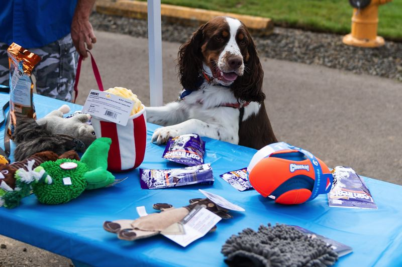 PMG PHOTO: CHRISTOPHER OERTELL - Louie checks out some of the raffle prizes at the grand opening of Cornelius' first off-leash dog park.