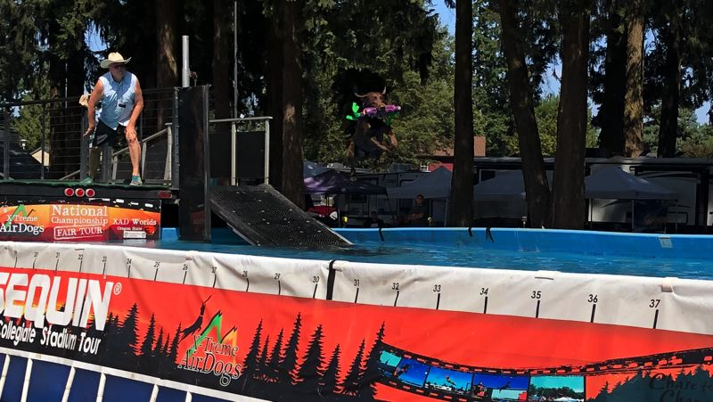 PMG PHOTO: NOAH WASS - A feature at last week's fair involved the Air Dogs contest in which canines competed to see how far they could jump across a pool.