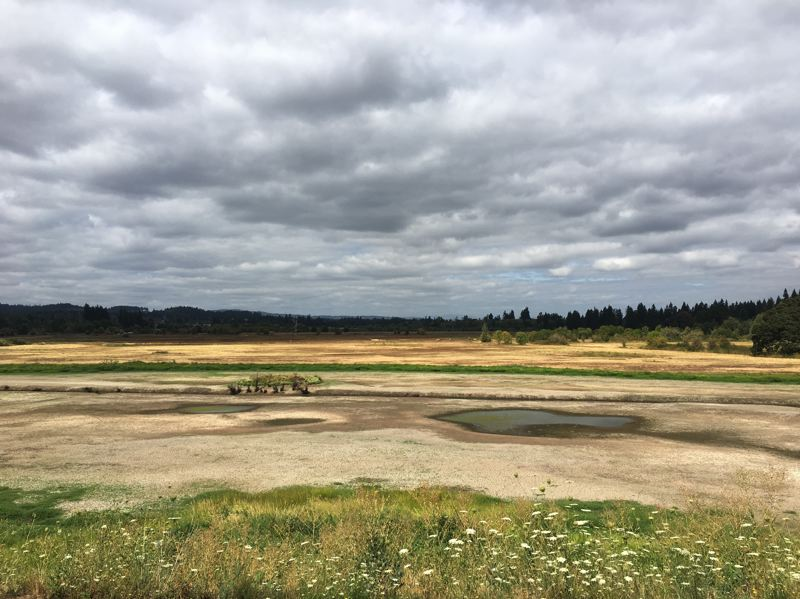 PMG PHOTO: JACKSON MAIN - The Atfalat'i Unit at the Tualatin River National Wildlife Refuge near Sherwood will be getting some TLC as work begins on restoring Chicken Creek.
