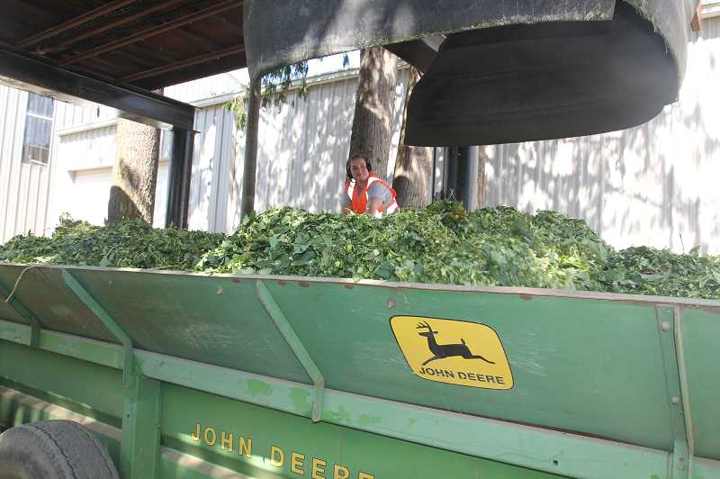 PMG PHOTO: JUSTIN MUCH - Compost task at Fobert Farms, Hubbard: once picked and cleaned, every part of the hop vine is transported back to the field to use as compost.