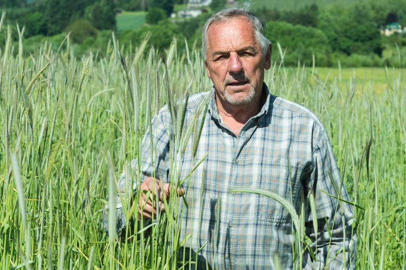 PMG PHOTO: CHRISTOPHER OERTELL - Lyle Spiesschaert stands in a field of rye almost as tall as him.