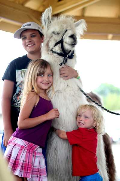 PMG PHOTO: PHIL HAWKINS - Caesar the No Drama Llama took selfies and received hugs at his visit to the Mount Angel Public Library on Thursday. Caesar makes upwards of three visits a day at public events during the busy summer months and wrapped up his week with a four-day appearance at the Oregon State Fair over Labor Day weekend.