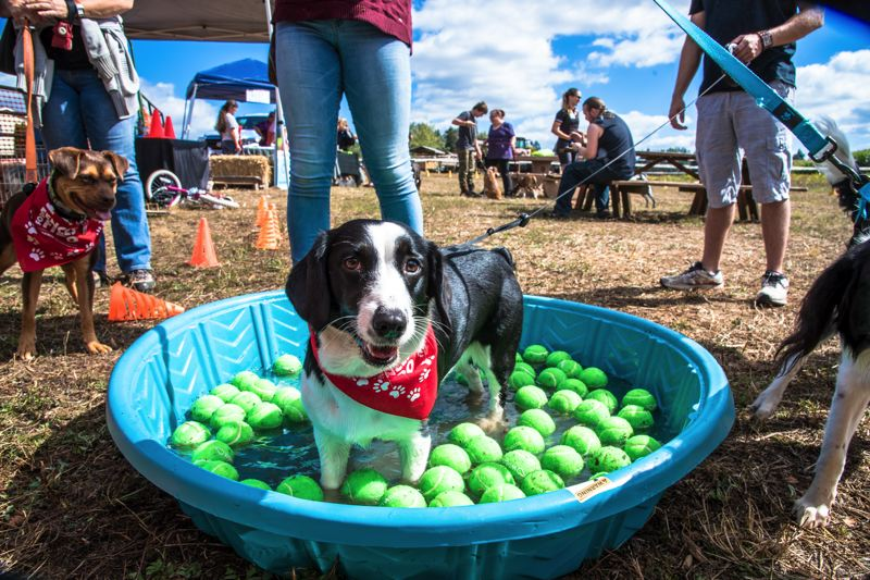 COURTESY PHOTO - Dogs at the Dogs Day Out event must be kept on a leash and picked up after by their owner(s).