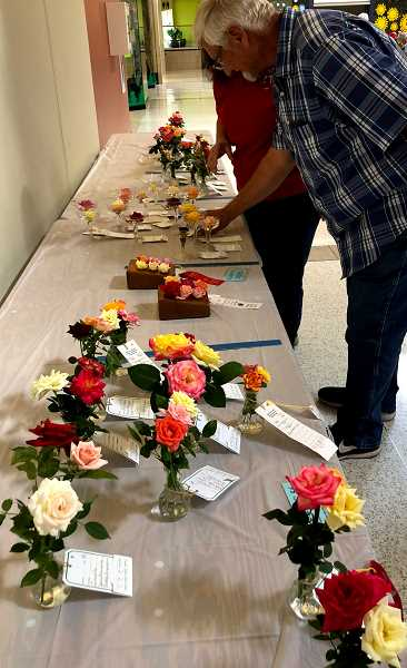 COURTESY PHOTO - The Tualatin Valley Rose Society will host its annual Rose Show at at Cedar Hills Crossing Mall on Saturday-Sunday, Sept. 7-8.