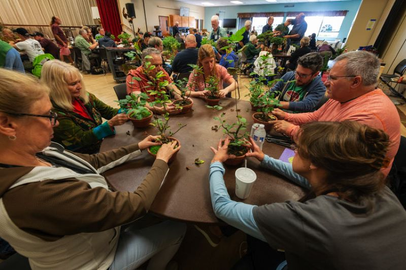 COURTESY PHOTOS - Bonsai Society of Portland member Scott Elser, right, in orange T-shirt, leads a workshop about how to work with crab apple trees at an event last year at the Milwaukie Center.