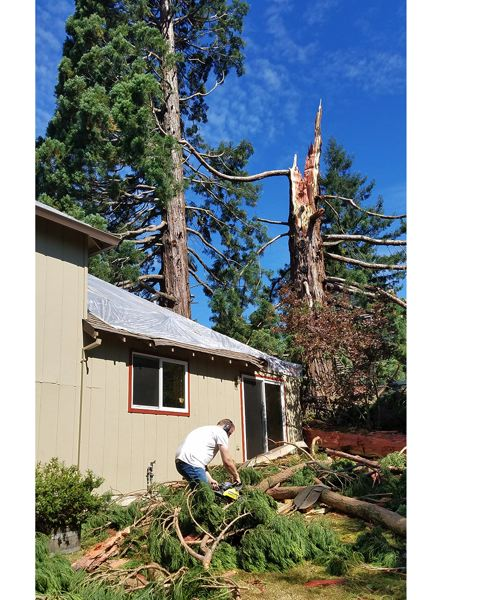 COURTESY PHOTOS - Gladstone School District Facility Manager Ryan Johnson uses a chain saw to cut a sequoia into firewood after it was struck by lightning Aug. 28.