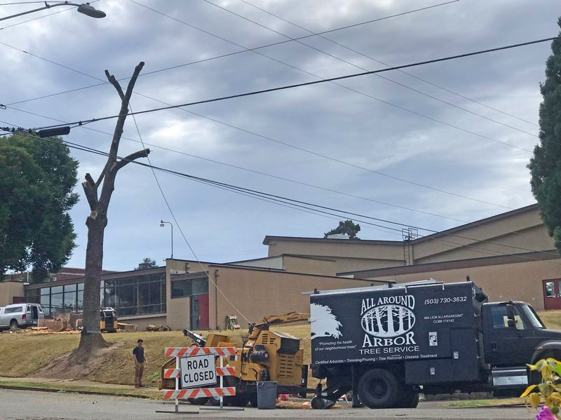 On Aug. 29, Oregon City officials contracted with All Around Arbor to cut down a healthy black walnut tree at the Swimming Pool site.