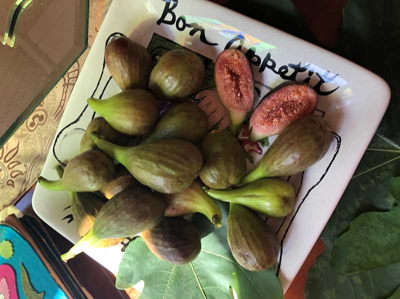PMG PHOTO: BARB RANDALL  - Trista Nelson of Lake Oswego has a prolific 60-year-old fig tree. She loves figs and hopes others will try them.