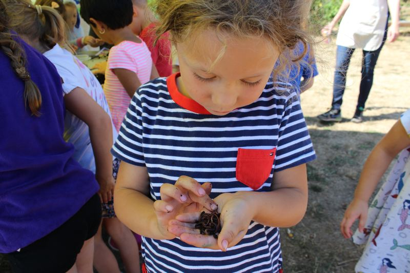 PMG PHOTO: CLAIRE HOLLEY - Kindergartener Emerson (Emmy) Romans examines a handful of worms she found in the soil.
