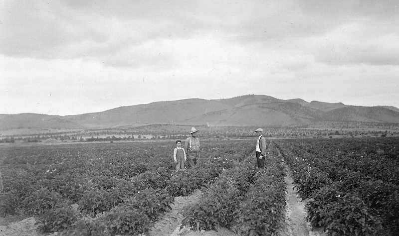 PHOTO COURTESY OF BOWMAN MUSEUM - Farmers stand in a Netted Gem potato field in Powell Butte in early 1900s.
