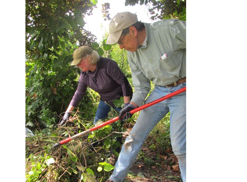 PMG PHOTO: ELLEN SPITALERI - Patty Lyons and Phil Lemons remove clematis vines and other invasives near the pond at Minthorn Springs Wetland near Milwaukie Marketplace on Sept. 14.