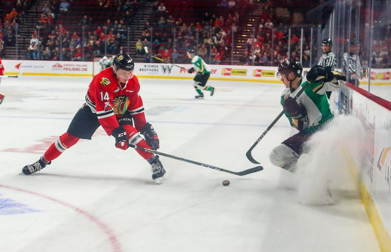 COURTESY PHOTO: PORTLAND WINTERHAWKS - Jake Gricius (left), battling for the puck in a game last season, is among the key returnees for the 2019-20 Portland Winterhawks, who open their Western Hockey League season Saturday night at Moda Center.