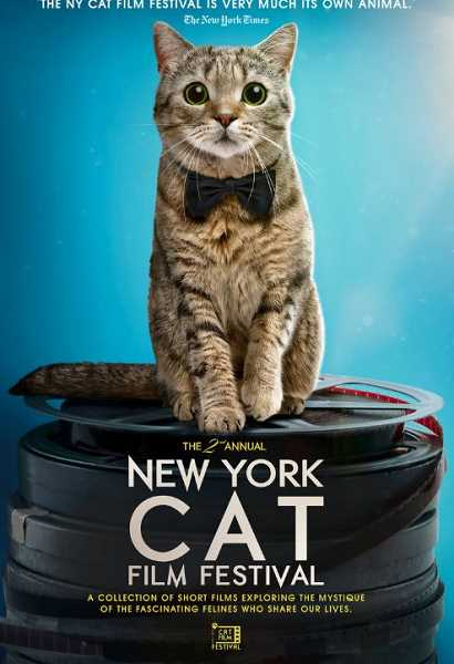 COURTESY NY CAT FILM FESTIVAL - The Second Annual NY Cat Film Festival and The Third Annual NY Dog Film Festival hit Tigard's Regal Bridgeport Village Screen X & IMAX screens on Sept. 24 and Oct. 1, respectively.