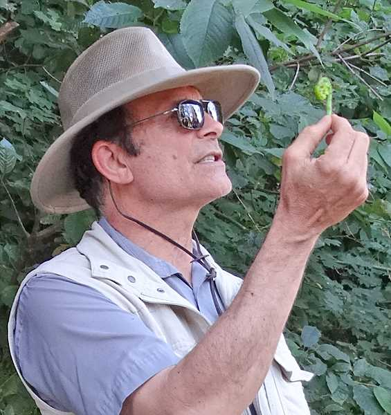 COURTESY PHOTO  - Wild food expert John Kallas will talk on foraging in your own backyard for edible plants. The presentation is free and open to all.