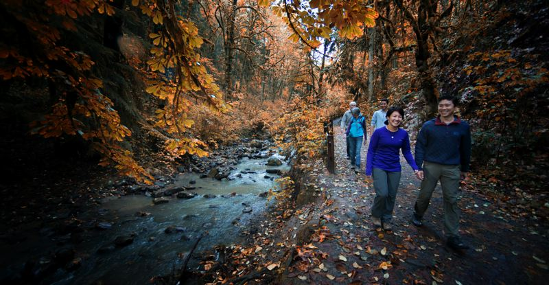 COURTESY PHOTO: BRUCE MACGREGOR - Hikers take in the foliage at Forest Park in Portland.