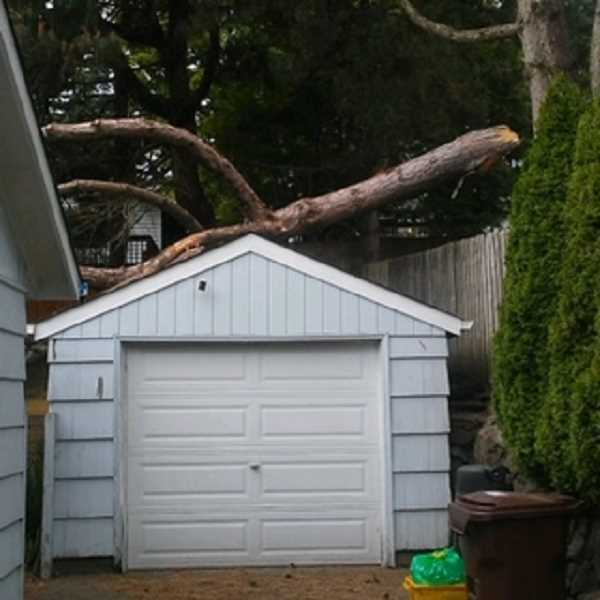 COURTESY PHOTO: PETER TORRES - A crew from Multnomah Tree Experts was sent out to remove a large tree branch that split off from the trunk and landed on the neighbor's garage on Southwest Third Ave. off of Barbur Boulevard.