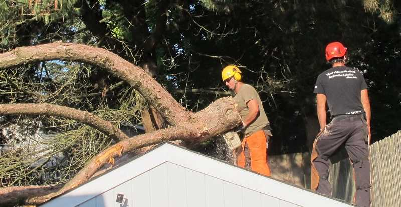 PMG PHOTO: BILL GALLAGHER - Ryan Neumann, with chain saw, and Cyrus Wesson removed the big branch in pieces.