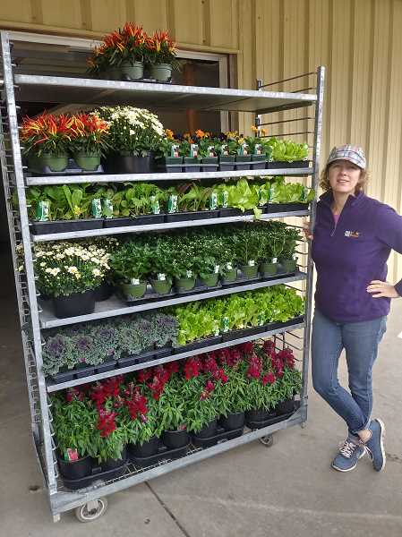 PMG PHOTO: JUSTIN MUCH - Leigh Geschwill of F&B Farms and Nursery said a wide variety of plants are in demand during Willamette Valleys autumn season, including this order containing a variety of greens and ornamental peppers.