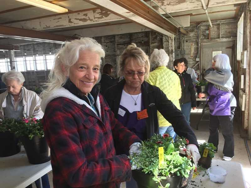 COURTESY PHOTOS  - Friends of the Rogerson Clematis Collection will host a plant sale and class Oct. 5 at the garden at Luscher Farm. The sale is free and open to all. There is a cost for the class.