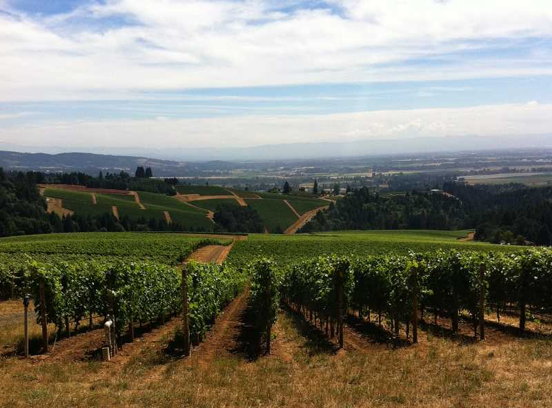 PGM PHOTO - The view from Knudsen Vineyards overlooking the valley.