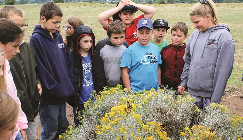 JASON CHANEY - A group of Lisa Kelly's fifth-grade students marvel at the recently released monarch butterflies. Because of the colder weather, the freed monarchs were content to perch on the small bush at the south end of the elementary school property before later taking flight.