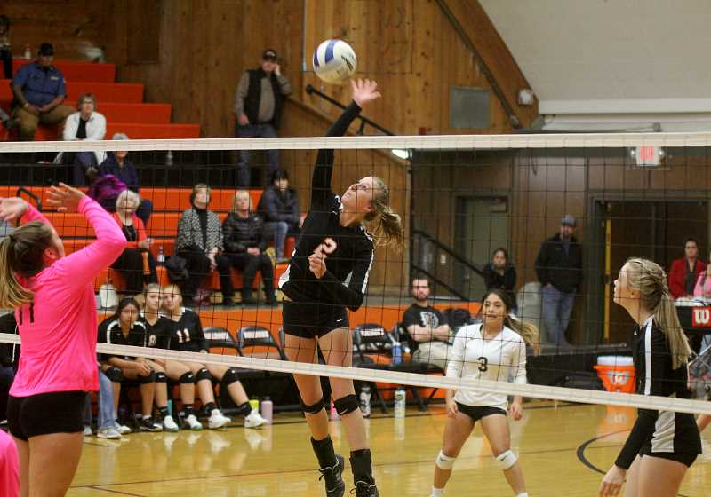 Lady Dawgs volleyball on roll