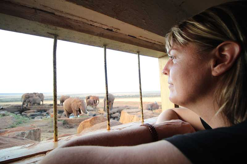 Debbie Ethell, founder of KOTA Foundation, (Keepers of the Ark) has written The Will of Heaven: An Inspiring True Story about Elephants, Alcoholism and Hope. It is  the true story of how she overcame debilitating addiction to become a conservation research scientist, fulfilling her lifelong dream of working with wild elephants.