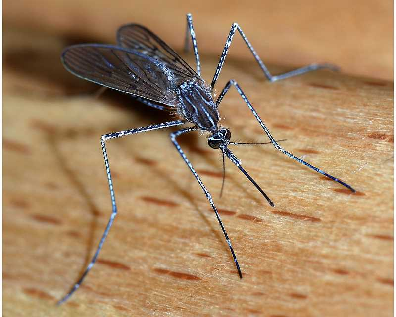 West Nile virus detected in horse in Crook County
