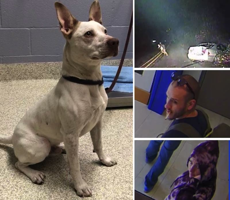 VIA CCSO - A one-year-old pooch, left, was abandoned by two suspects from Seattle, Parker Timmothy Savoie, 27, of Seattle and Jordan Dian Vinson, 28, during a pursuit by Clackamas County Sheriff's deputies in Happy Valley on Sunday, Oct. 13.