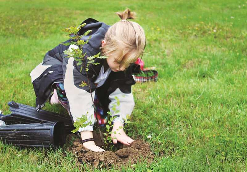 SUBMITTED PHOTO - Youths and adults alike gathered at Newberg High School during the recent 'climate strike' to plant trees and rid the grounds of invasive species like English Ivy.