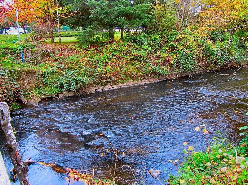 ERIC NORBERG - This photo of Johnson Creek at S.E. Ochoco Street was taken on October 21.