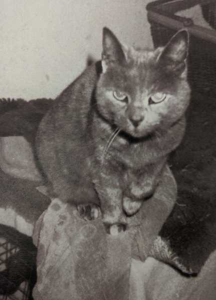 COURTESY PHOTO - Many years ago, Kathryn Hurds cat Smokey knew something was amiss in their home in Northwest Clackamas County.