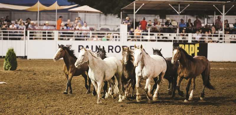 COURTESY PHOTO: LANEY BRENTANO - Bucking horses run through the arena at the St. Paul Rodeo this year. The rodeo has won the PRCAs Remuda Award, for the best, most even pen of bucking horses.