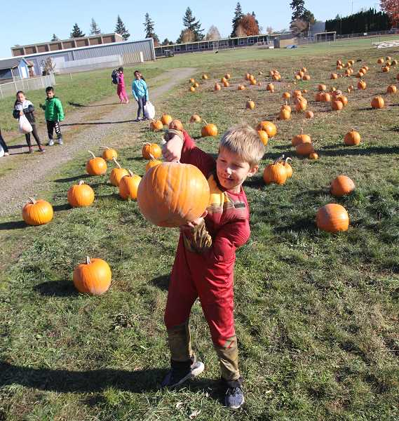 PMG PHOTO: JUSTIN MUCH - Finding the right pumpkin was a paramount pursuit at the Gervais FFA Elementary School Community Pumpkin Patch on Thursday, Oct. 30.