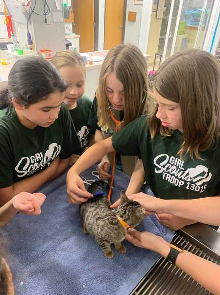 PHOTO COURTESY OF NICHOLE HETLAND - Members of Woodburn Girls Scout Troop No. 13019 get an up-close look at veterinary care during a recent visit to Woodburn Pet Hospital. Left to right, Mercedes Garza, Rhiannon Chiniewicz, Aubrie Hetland and Haylee Rose.