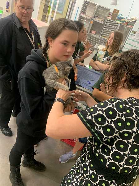 PHOTO COURTESY OF NICHOLE HETLAND - Olivia Clark helps out Dr. Beth Nguyen as members of Woodburn Girls Scout Troop No. 13019 get an up-close look at veterinary care during a recent visit to Woodburn Pet Hospital.