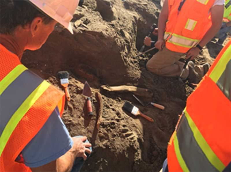 PHOTO COURTESY OF EASTERN OREGON UNIVERSITY - Students and faculty from Eastern Oregon University spent four long days excavating mammoth remains this month.
