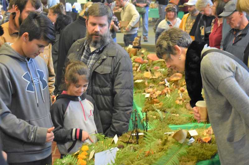 PMG PHOTO: EMILY LINDSTRAND - Festival of the Fungus attendees admire specimens on display at the annual event.