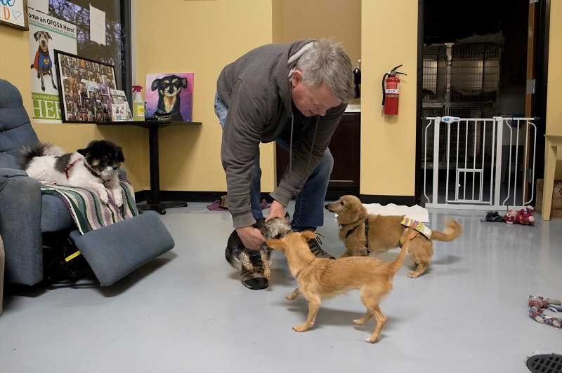 PMG PHOTO: JAIME VALDEZ - Scott Porter wrangles together the four dogs in the adopt-a-rescue-dog waiting room where customers can sit and visit with the dogs for a nominal fee.