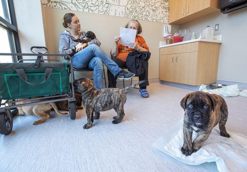 PMG PHOTO: JONATHAN HOUSE - Morgan Hamilton, left, and Barbara Long wait for their vet appointment at Dove Lewis  to begin with their litter of Bullmastiff puppies.