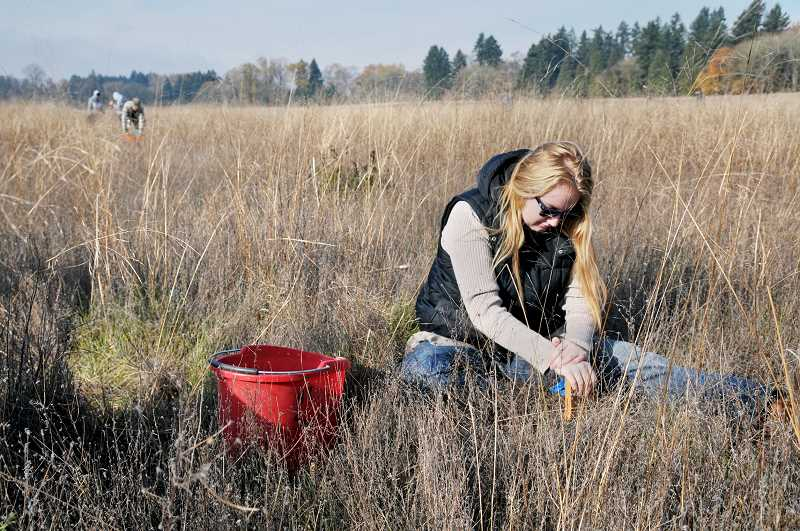 GRAPHIC PHOTO: GARY ALLEN - Newberg High School senior Naomi Browning joined others in planting native bulbs at the Champoeg State Heritage Area on Friday.