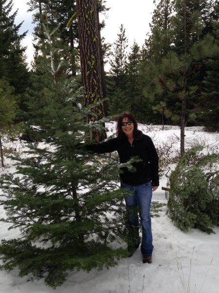 COURTESY PHOTO: USFS - Those interested can find their holiday tree on the Mt. Hood National Forest.