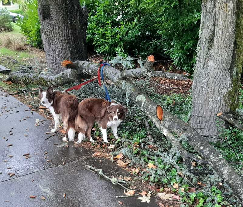 The tree was quickly removed and turned into a hitching post for Doolin and Nola.