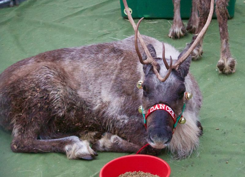 PMG FILE PHOTO - Gresham Station will have some of Santas reindeer on display Dec. 14 and 15.