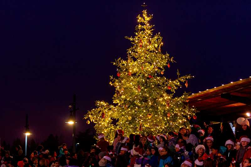 PMG PHOTO: DIEGO DIAZ - The large Christmas tree in Cannery Square Park was illuminated following festivities on Dec. 7.
