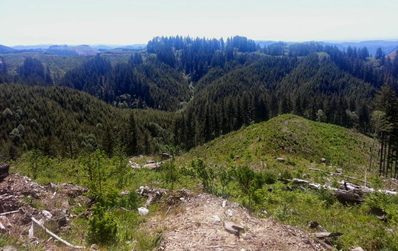 COURTESY PHOTO: DEPARTMENT OF STATE LANDS - The State Land Board is taking more time to sort out the future of the Elliott State Forest in Douglas and Coos counties.
