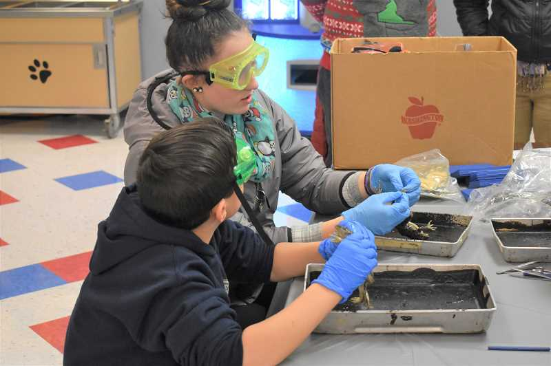 PMG PHOTO: EMILY LINDSTRAND - Dissecting frogs was one of many activities during science night at Estacada Middle School.