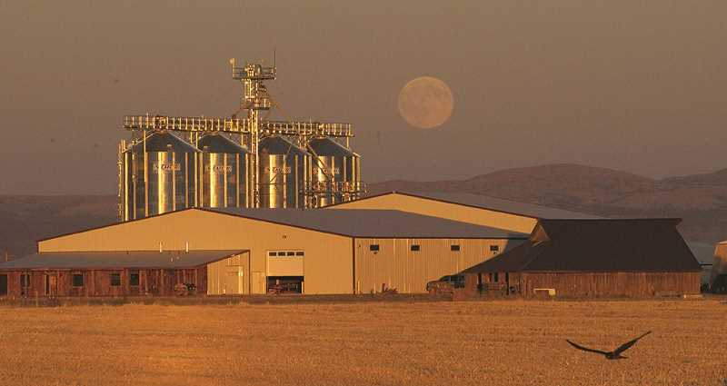 JANE AHERN/FOR THE PIONEER - The moon rises behind the Klann family's silos and malt house on Agency Plains, north of Madras. The Klanns, as Mecca Grade Growers, have gotten into the barley malting business with their Mecca Grade Estate Malt facilities., Madras Pioneer - News