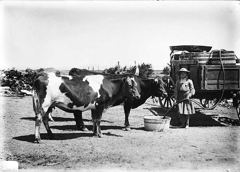 SUBMITTED PHOTO - Ellen Luelling, the oldest daughter of Seth and Cora Luelling, waters livestock on the family's homestead on Agency Plains., Madras Pioneer - News In August, the Klann Farms on the Agency Plains and 27 Bar Ranch near Ashwood reached the 100-year milestone. A Century on the Land